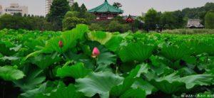 turismo em tóquio lotus